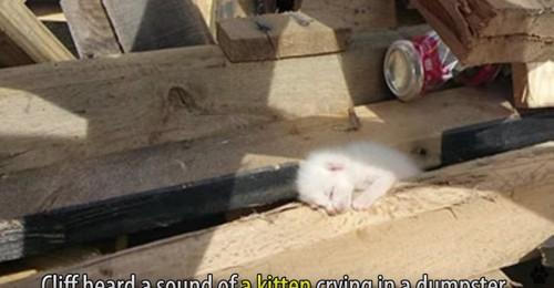 材木の隙間に埋れた白猫