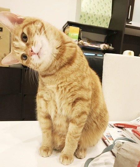 首を思い切りかしげている猫