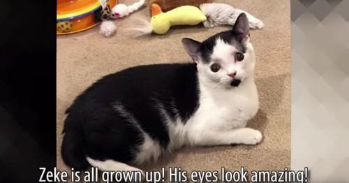 横になる黒白猫