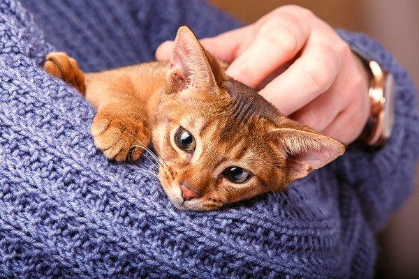青い人に抱っこされる猫