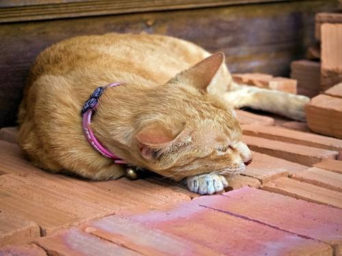 レンガの上に寝ている猫