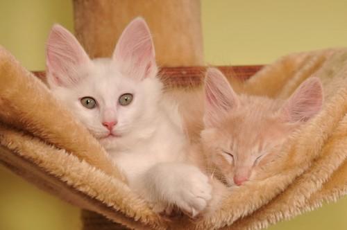 キャットタワーで寝る2匹の猫