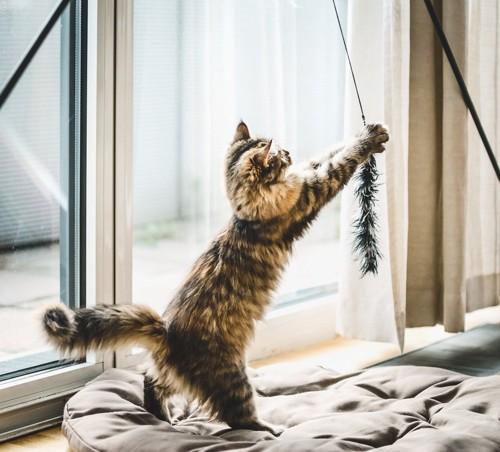 窓際のおもちゃで遊ぶ猫