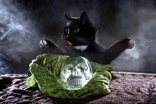 クリスタルスカルと黒猫
