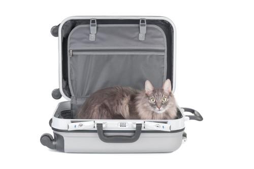 トランクケースに居る猫