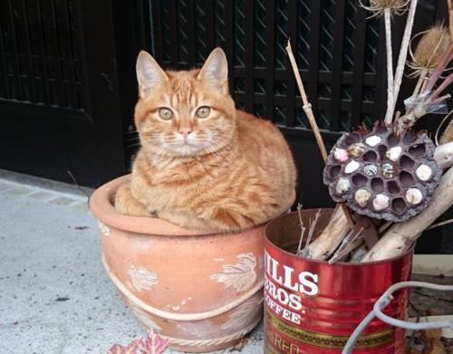 植木鉢でくつろぐ