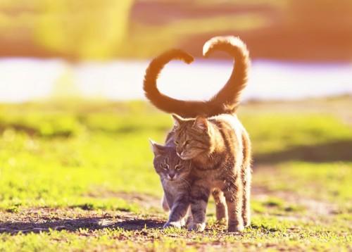 しっぽがハート型の猫