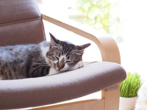 椅子の上で気持ちよさそうに眠る猫