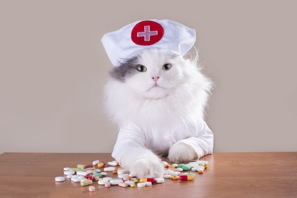 ナースキャップをかぶった猫とテーブルの上の薬