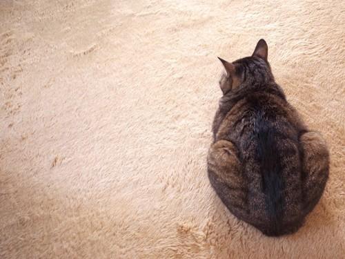 絨毯の上で背中を見せて座る猫