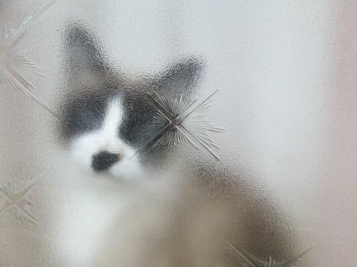 モザイク猫