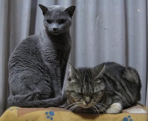 立った猫と伏せている猫