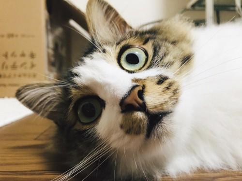 見てしまった猫