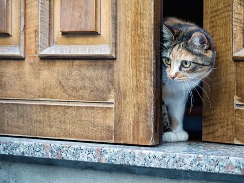 扉から顔を覗かせる猫