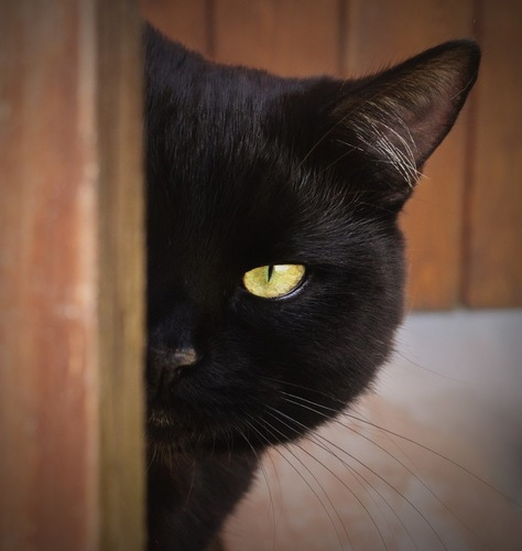 扉の陰からこちらを見る猫