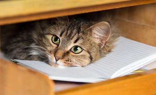 引き出しの中に隠れている猫