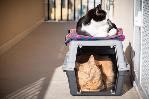 ケージの中と上でそれぞれくつろぐ猫たち