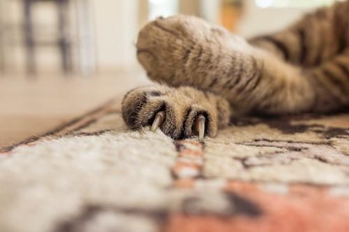 カーペットに爪を立てる猫の手アップ