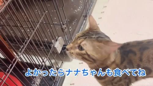 ケージの前に立つ猫