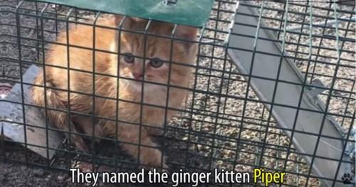 ケージの中のチャトラ猫