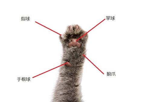 猫の手の図解