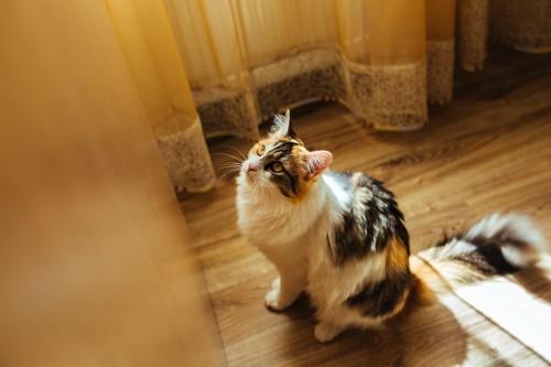 壁際で上を見上げる猫