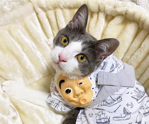 浴衣を着た猫