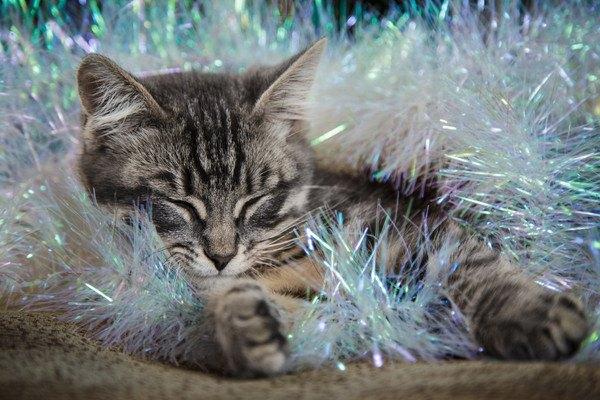 キラキラした飾りの中に猫