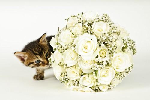 結婚式のブーケと猫