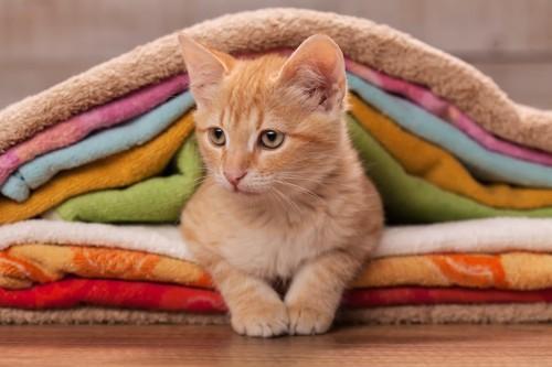 重ねられたタオルの間にいる子猫