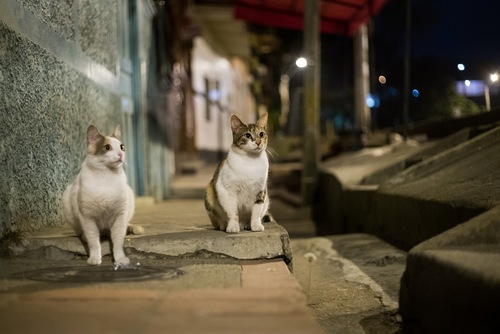 夜の野良猫
