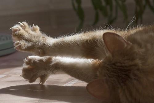 寝転がって爪を出して伸びをする猫