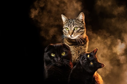 煙の中にいる3匹の猫