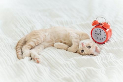 目覚まし時計の隣で寝転んでいる猫
