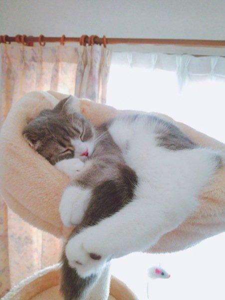 白目をむきながら寝ている猫