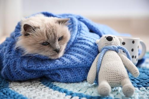 ニットに包まってぬいぐるみと休む猫