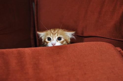 恐る恐るのぞく猫
