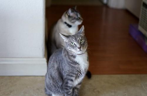 こちらを見ている猫とその向こうで横を見る猫
