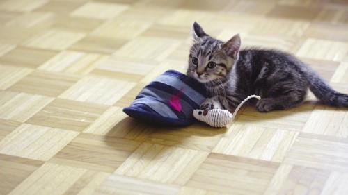 スリッパと鼠の玩具と子猫
