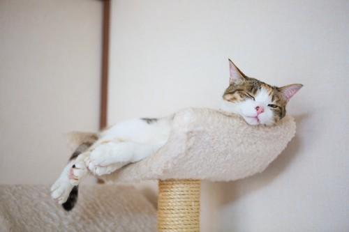 眠る三毛猫
