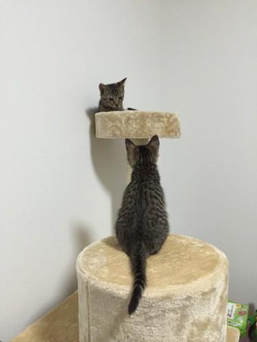 キャットタワーに登るふたり