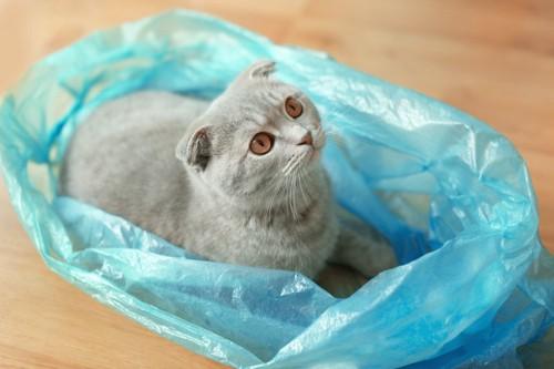 青いビニール袋に入る猫