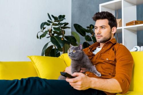 飼い主と一緒にテレビを観る猫