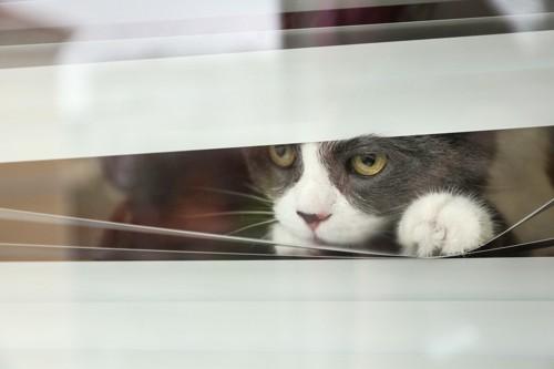 窓の外を真剣に見つめる猫