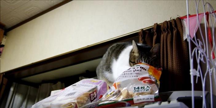 お菓子の袋を漁る猫