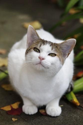 甘えたそうにしている猫