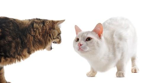警戒し合う猫