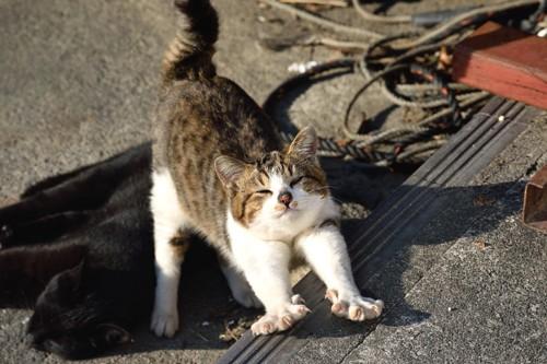 爪を出して伸びる猫