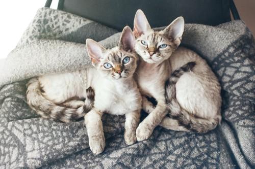 隣り合って眠る2匹の子猫