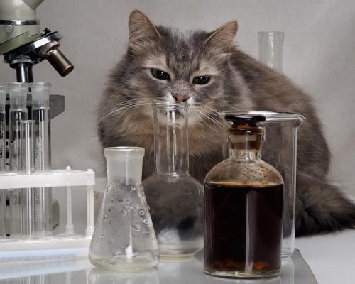 ビーカーを嗅ぐ猫